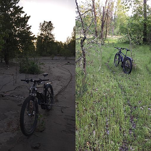ebike in forest.jpg