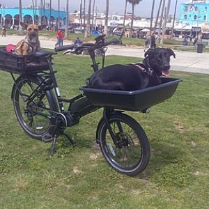 Cero One cargo ebike carrying dogs.jpg
